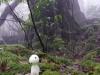 苔むす森と木霊